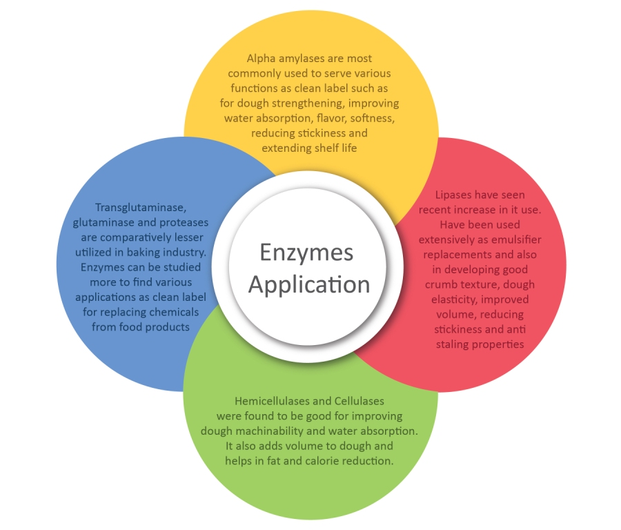 Enzyme-application1