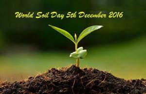 soil-dirt-plant-735-350