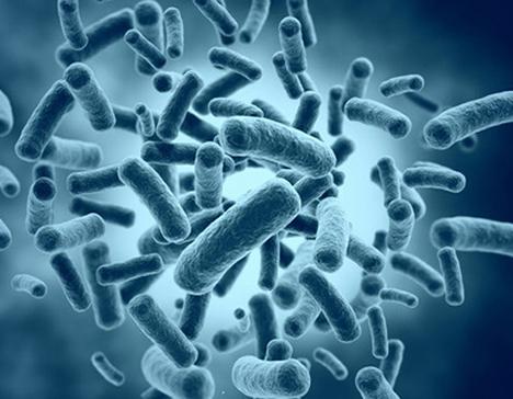 Recent developments in microbiome therapeutics whitepaper - Ingenious e-Brain